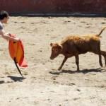 bullrunning 1